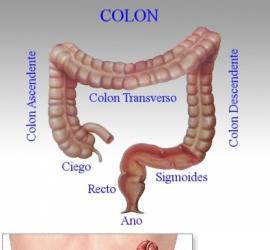 intestinto-grueso.jpg